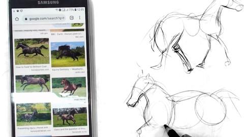 Netcurso-figure-animal-drawing-for-beginners