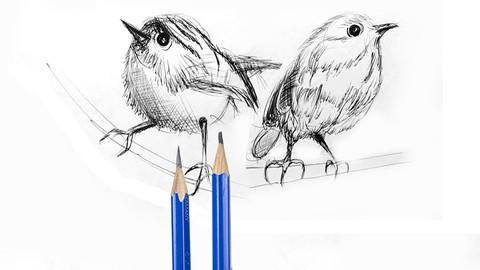 Drawing & Sketching of Birds