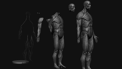 Netcurso-learn-how-to-sculpt-a-male-anatomy-figure-in-zbrushcore