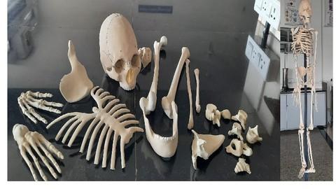 Netcurso-human-anatomy-physiology