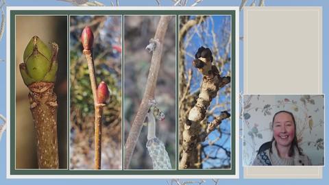 Netcurso-discover-winter-trees