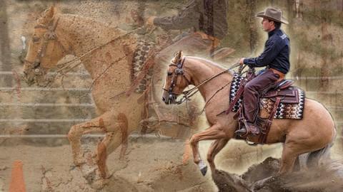 Netcurso-preparing-your-horse-for-success