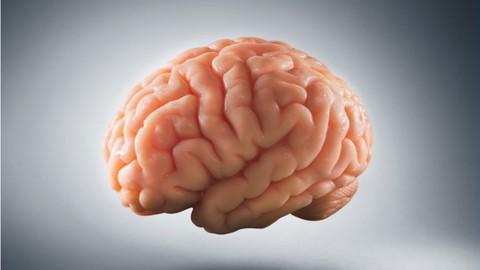 Netcurso-nervous-system