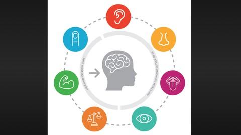 Netcurso-sensory-processing-and-the-classroom