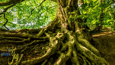Netcurso-authentic-joy-spiritual-growth-foundation-course