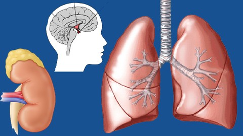 NCLEX Simplified: Respiratory and Endocrine
