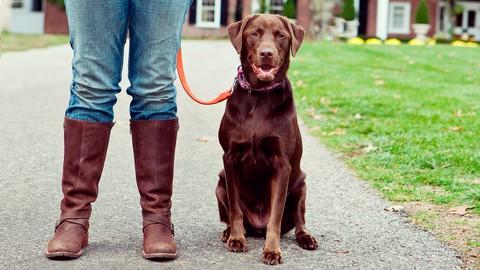 Netcurso-simple-solutions-for-common-dog-behavior-training-problems