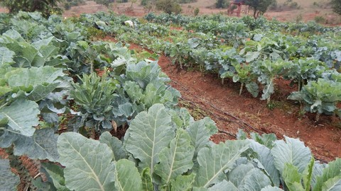 Growing organic food on small plots - made easy