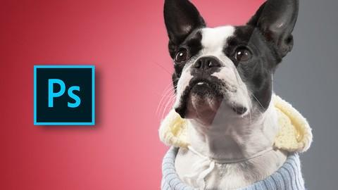 Adobe Photoshop Animal Retouching