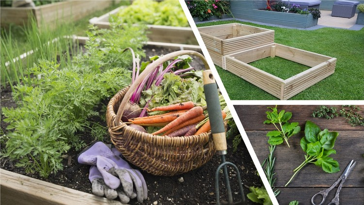 5 Easy-to-grow vegetables & herbs plus vegetable planter