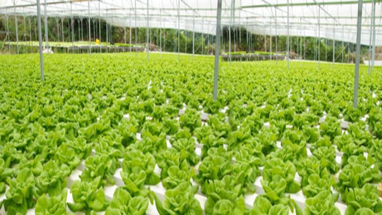 Modern Aquaponics Farming & Gardening