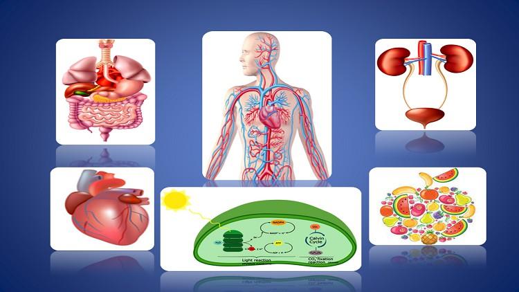 Biology – Nutrition, Respiration, Circulatory, Excretion