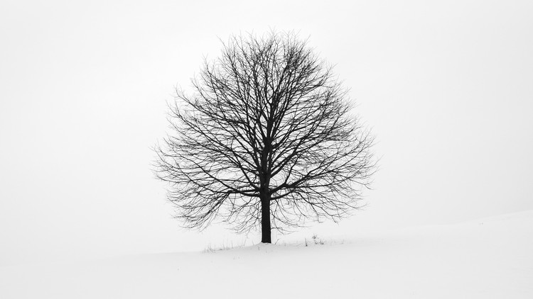 Binary Trees - Crash Course Coupon