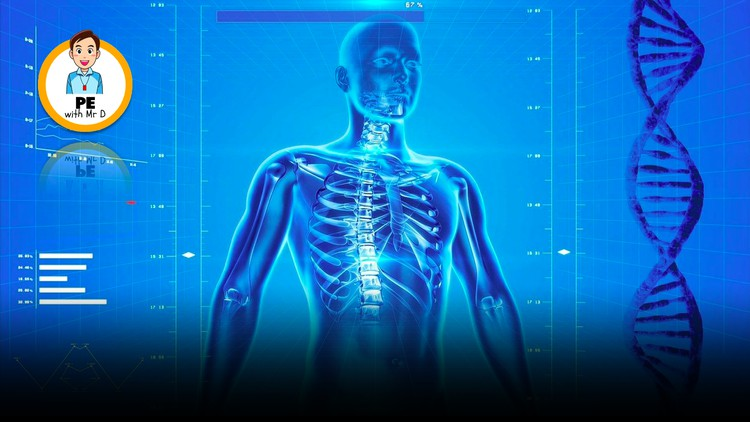 Anatomy Crash Course   Muscles, Bones, the Heart & the Lungs