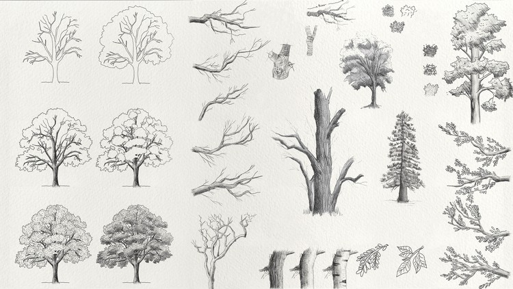 Complete Trees Drawing Course