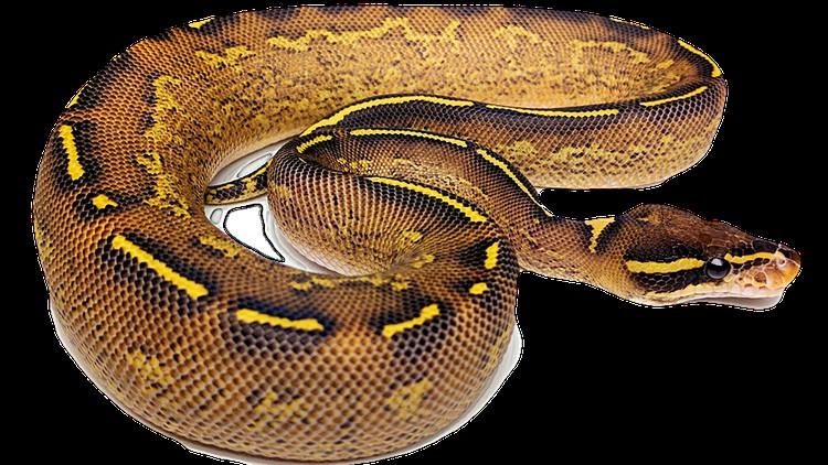Learn Python from basics